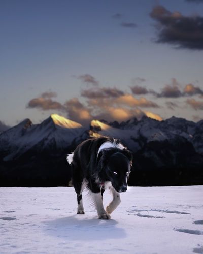 Dog standing on snow covered field against sky