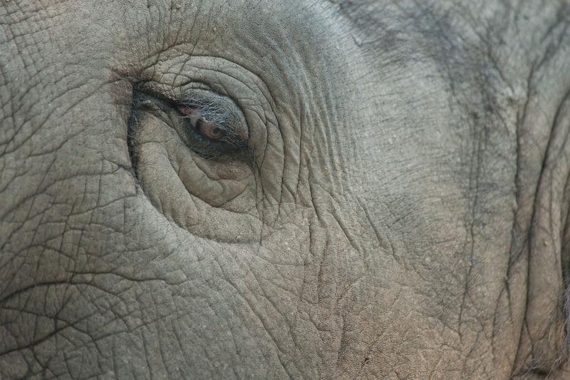 Full Frame Shot Of Elephant