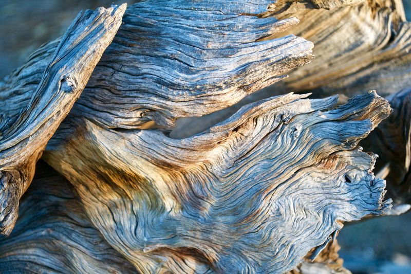 Close-up Day Tree Textured  Pattern No People Nature Wood - Material Tree Trunk Beauty In Nature Natural Pattern Bark Outdoors Wood