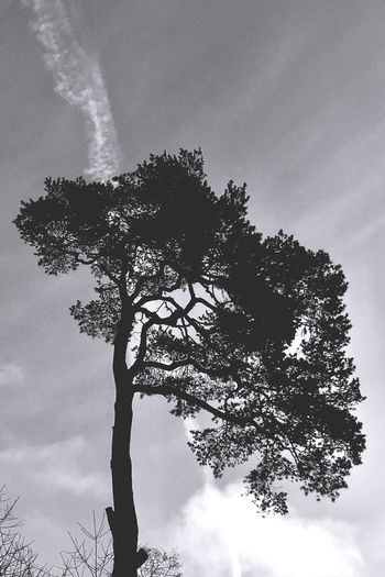 Tree silhuette