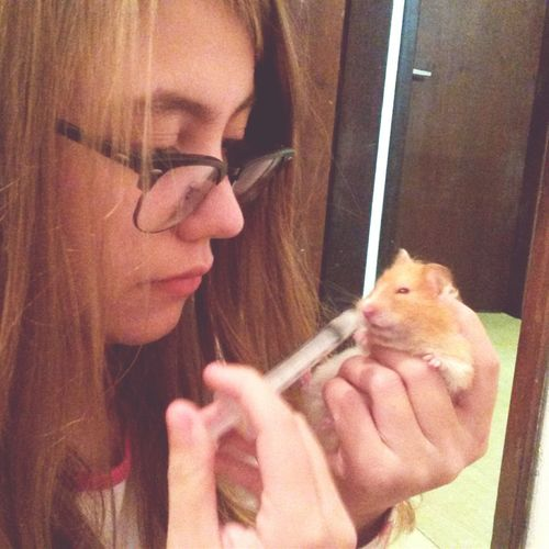My Hamster Hamster Love Love Lonely Cute Baby Hamster