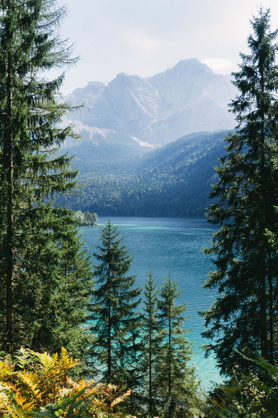 scenic view of lake and mountains between trees Adventure Alps Beauty In Nature Eibsee Forest Hike Horizontal Lake Landscape Mountain Mountain Range Nature Nature No People Outdoors Pine Tree Scenic View Sky Tree Wander Wanderlust Water Waxenstein Zugspitze Neighborhood Map The Great Outdoors - 2017 EyeEm Awards Perspectives On Nature