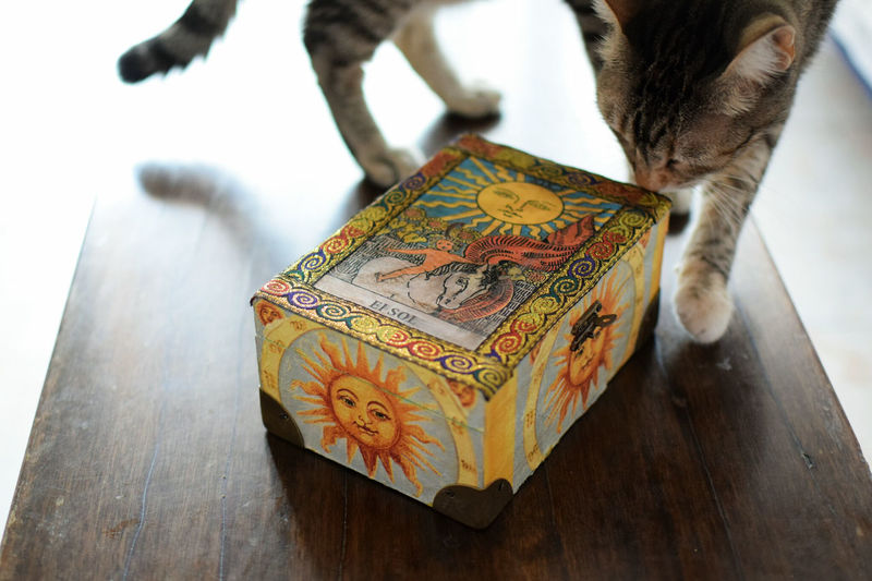 El sol Box - Container Wood - Material Tarot Card El Sol / The Sun Cat Light And Shadow Indoor Photography Table High Angle View Close-up Feline Domestic Animals