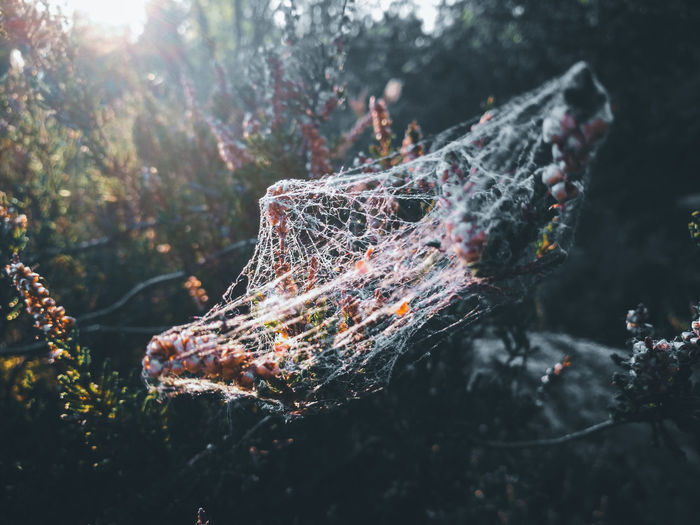 Close-up of spider web on plant in forest