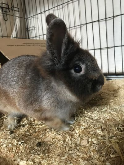 New Bunny 🐰 Domestic Animals Love ♥ Gorgeous Girl IPhoneography Poser ❤