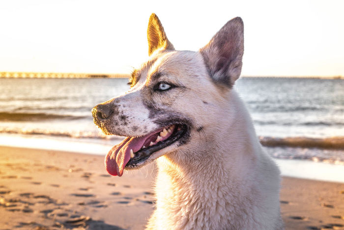 My beautiful boy! Pets Dog Domestic Animals Beach Close-up Animal Tongue Outdoors Sky Nature Day Sunlight Nature Water Beauty In Nature Sea Cloud - Sky
