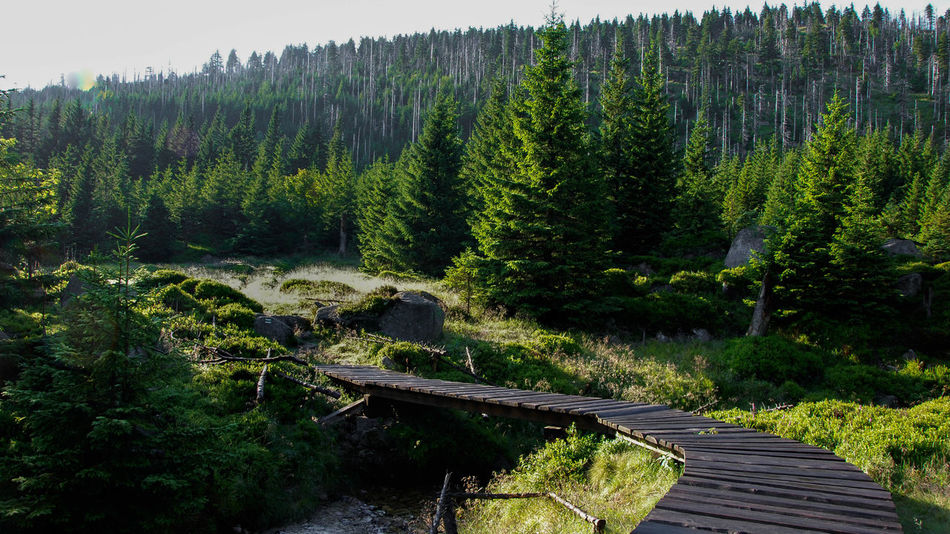 Wooden platform over mountain stream Forrest Photography Karkonosze Morning Light Sudety Trekking Beauty In Nature Bridge Day Forest Landscape Mountain Mountains Nature No People Outdoors Picea Pine Tree Platform Scenics Sky Summer Tranquil Scene Tranquility Tree Trek