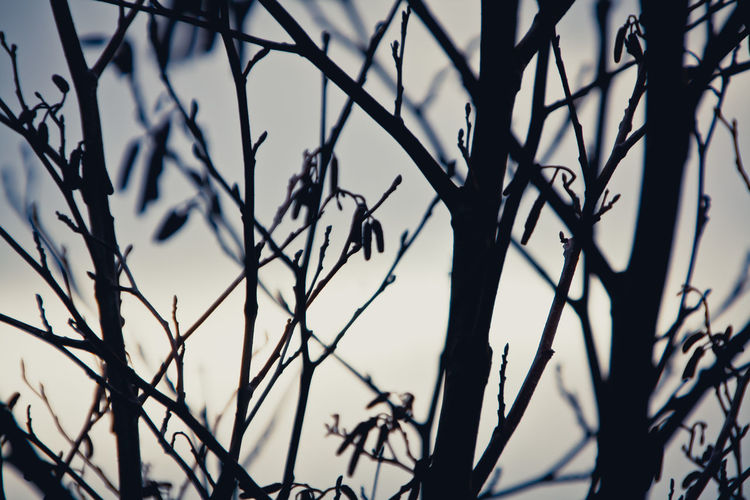 Bare Tree Branch Focus On Foreground Growth No People Twigs Winter Fine Art Photography