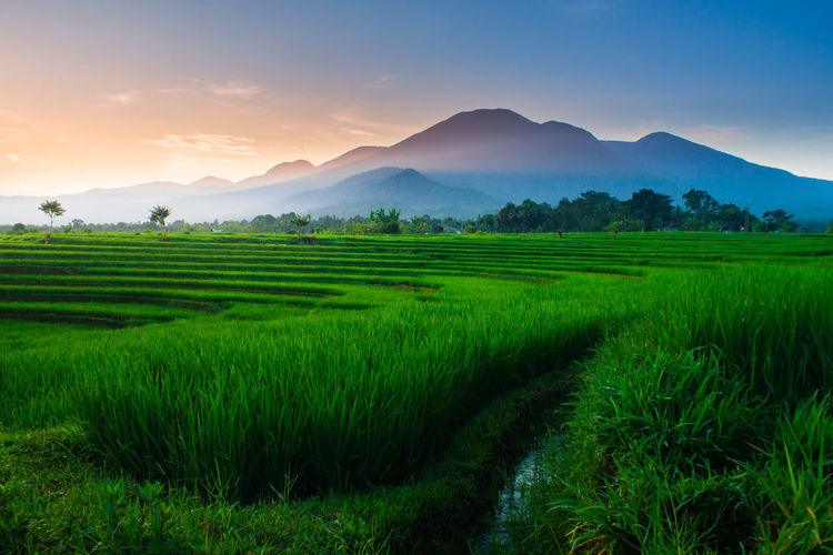 Natural portraits of rice fields and mountains in Indonesian rural areas with sunrise and green morning dew in Asia Scenics - Nature Landscape Agriculture Mountain Plant Rural Scene Beauty In Nature Tranquil Scene Sky Land Green Color Tranquility Field Environment Crop  Growth Nature Mountain Range Farm Rice - Cereal Plant No People Outdoors Plantation