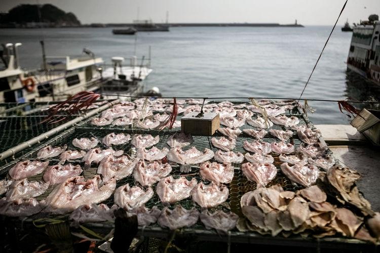 Fish Drying At Harbor