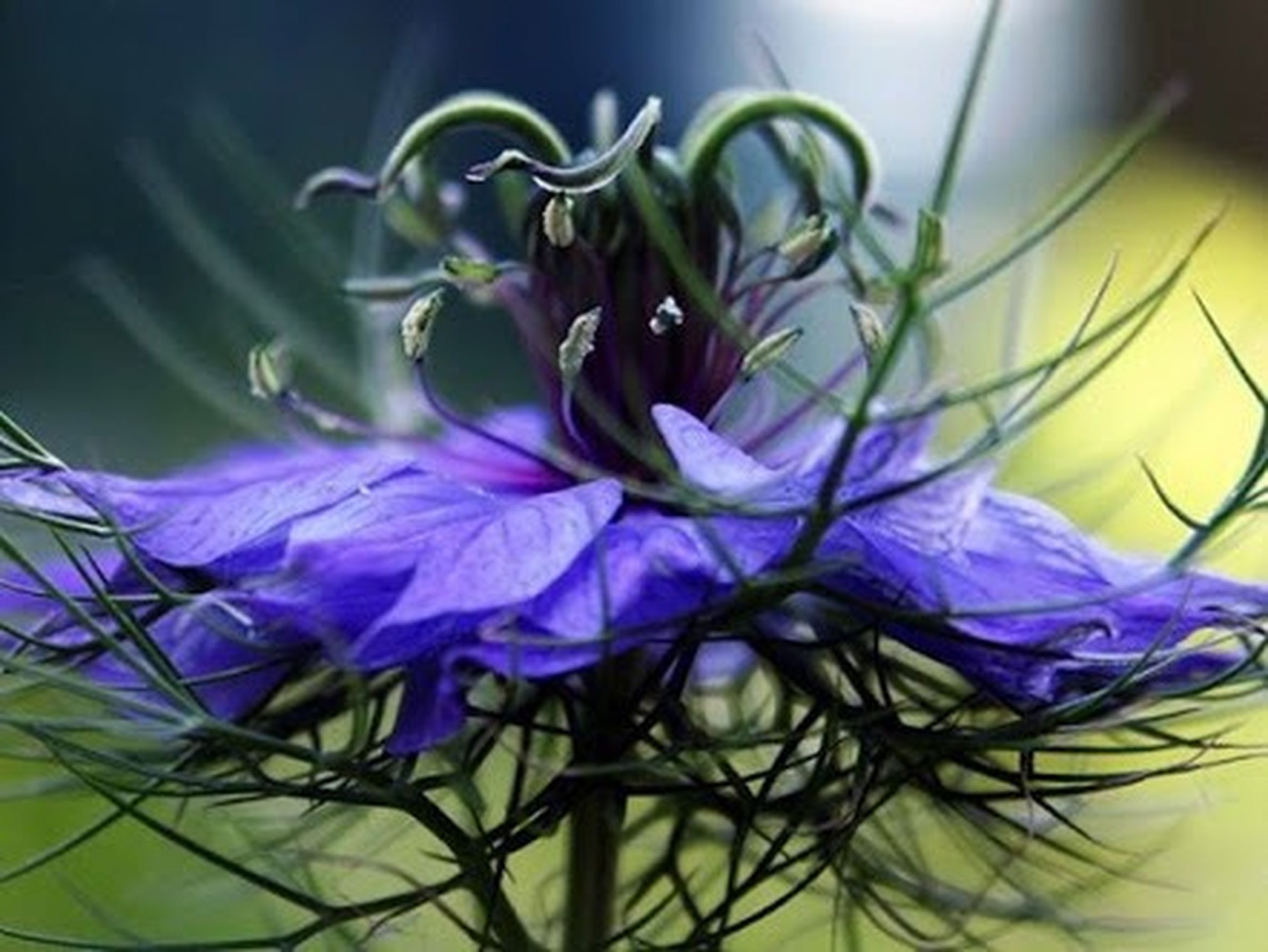 flower, indoors, purple, fragility, close-up, plant, petal, growth, freshness, flower head, blue, stem, nature, no people, beauty in nature, focus on foreground, leaf, home interior, blooming, wall - building feature