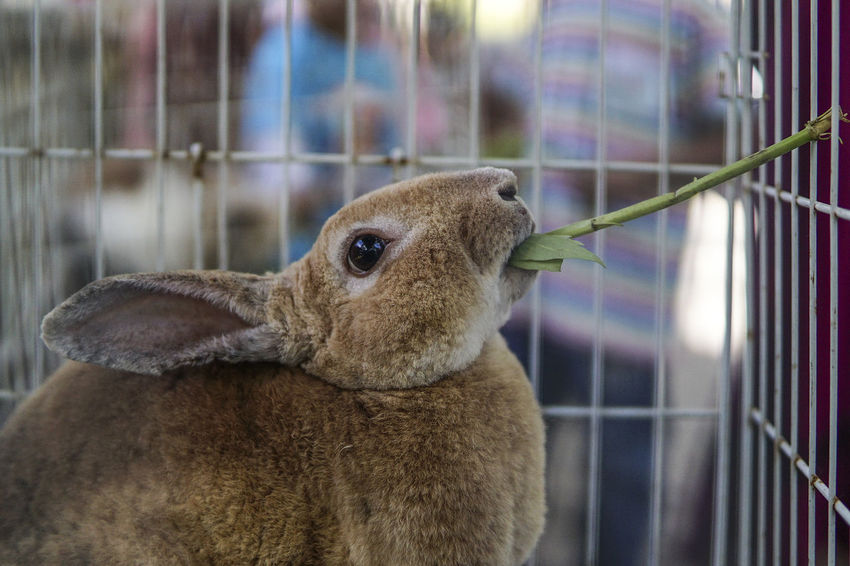 Feeding Animals Animal Themes Bunny  Cage Close-up Day Domestic Animals Feeding Bunny Feeding Rabbit Feeding Time Focus On Foreground Indoors  Mammal Nature No People One Animal Rabbit