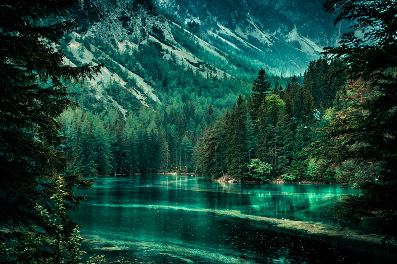 green lake. Beauty In Nature Coniferous Tree Day Environment Forest Idyllic Lake Land Mountain Nature No People Non-urban Scene Outdoors Pine Tree Pine Woodland Plant Reflection Scenics - Nature Tranquil Scene Tranquility Tree Turquoise Colored Water WoodLand