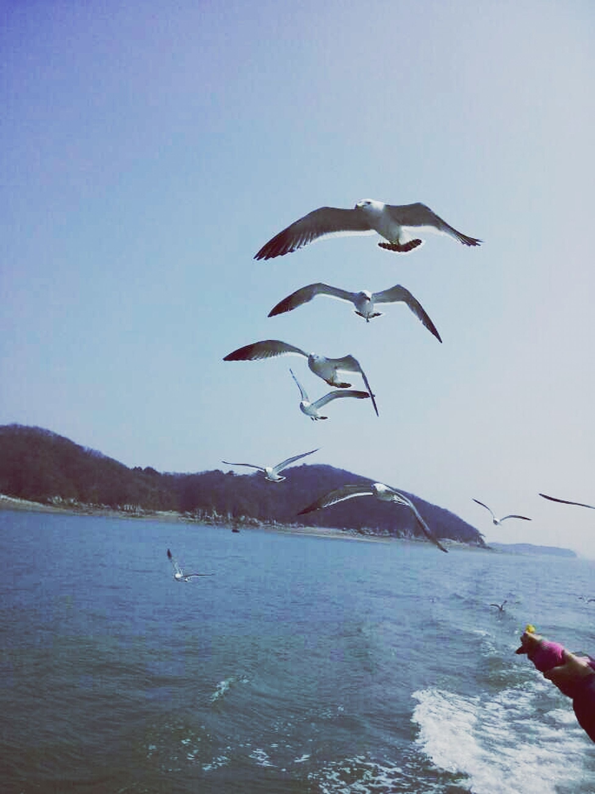 flying, bird, water, animal themes, animals in the wild, sea, wildlife, mountain, clear sky, mid-air, spread wings, scenics, seagull, nature, tranquil scene, beauty in nature, waterfront, tranquility, blue, sky