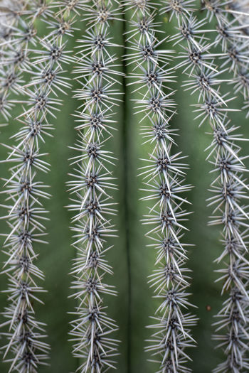 Full frame shot of cactus plant