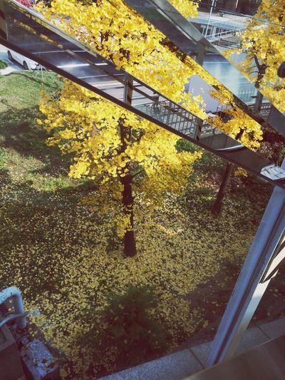 완연하다 드디어 Autumn Colors Fall In Seoul