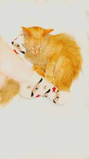 TK Maxx Socksie Pets Soft Texture Dog Socks Foot Socks Feet Lazy Cat Funny Cat Its Me Cat Desaturated Cat Lovers Pattern Texture Design Clothing Comfortable Softness Fuzzy Funny Socks Cozy Cute Socks Animal Legs And Feet
