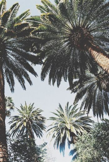 Summer Montpellier Check This Out Taking Photos Hello World Palm Trees