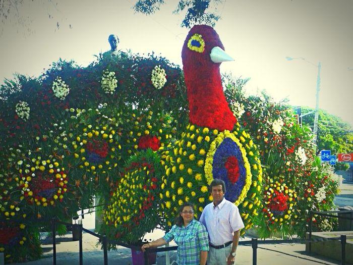 Pavo real de flores And parents