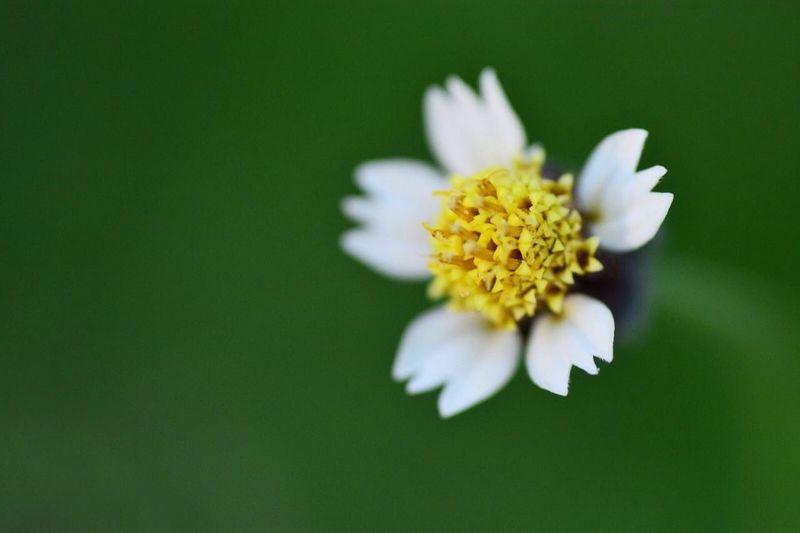 Flower Deapth Of Field