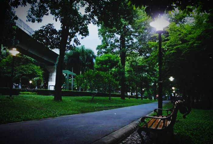 เพื่อนร่วมทาง เงา ดอกหญ้า แสงไฟ เหงา เก้าอี้ สวน Garden Tree Sky Grass