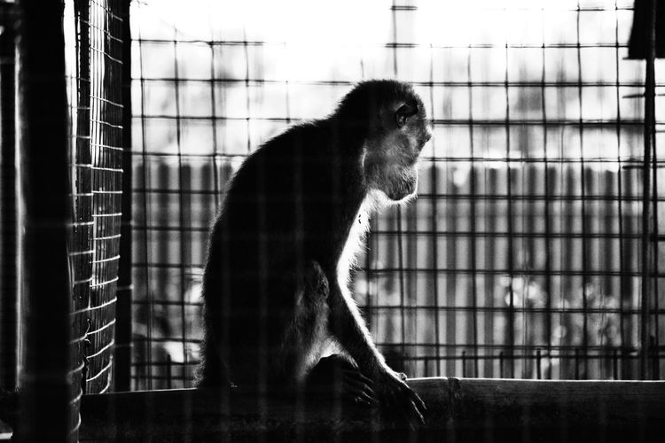 Waiting in vain Philippines Love Animal Zoo Outdoors Monkey Nature