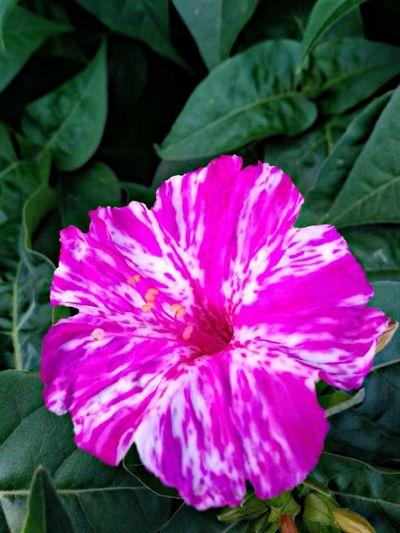 EyeEm Gallery Flower Porn Flower Collection Naturelovers