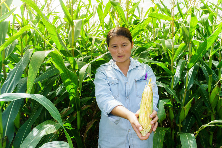 A young girl inspects the corn and notes the observations found. Care Check Detection Detection Tree Disease Detection Diseased Plant Farmer Green Color Observations Plant Tree Corn Disease Food Front View Girl Growth Inspects One Person Plant Portrait Product Raw Food See Tree Disease