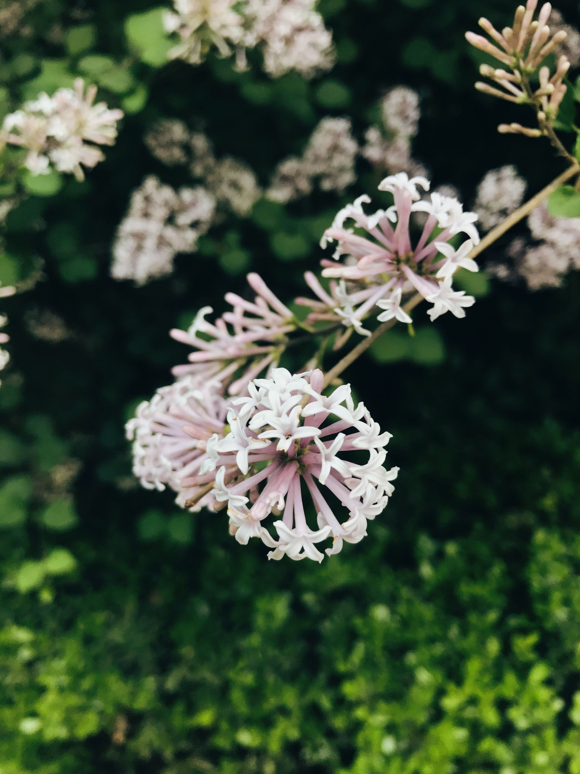 flower, nature, growth, fragility, beauty in nature, freshness, petal, flower head, close-up, blooming, no people, outdoors, day, plant, tree