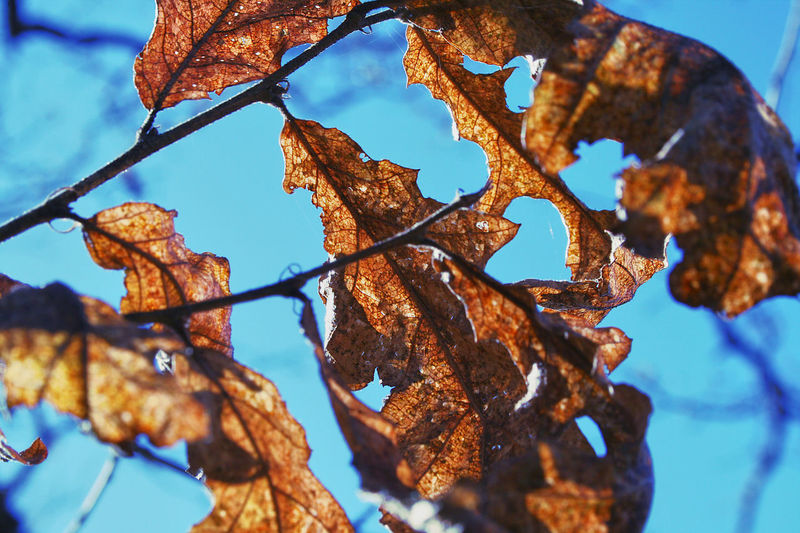 Autumn Autumn Leaves Beauty In Nature Branch Close-up Leaf Leaves Nature Outdoors Sky Tree