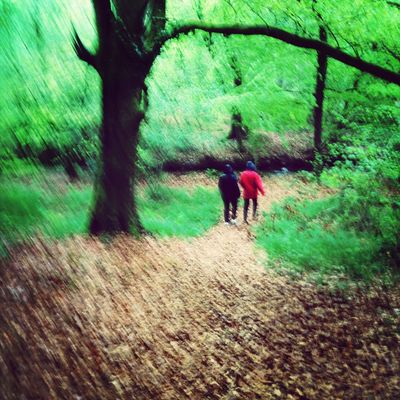 Somewhere over the rain. The Explorer - 2014 EyeEm Awards The Moment - 2014 EyeEm Awards A Walk In The Woods