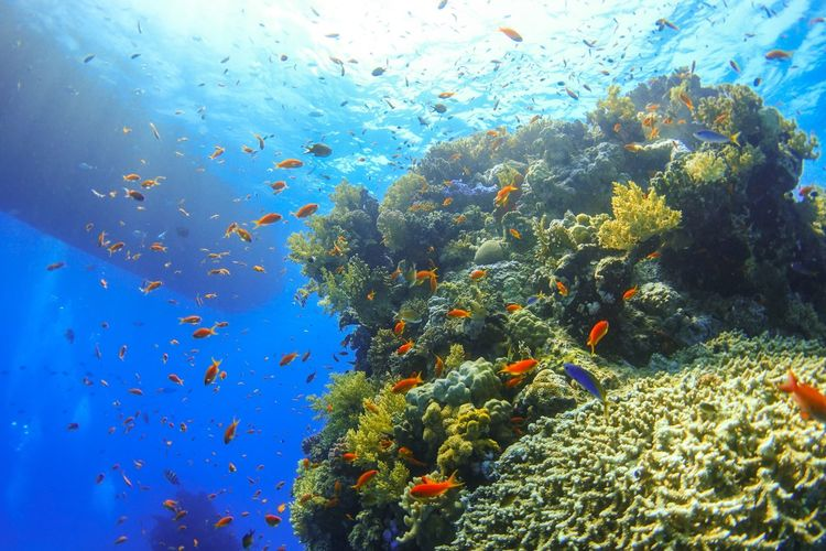 red sea Egypt Coral Scubadiving Liveaboard RedSea Plant Water Nature Blue No People Beauty In Nature Sky
