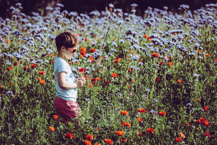 Rear view of boy on flowering plants on field