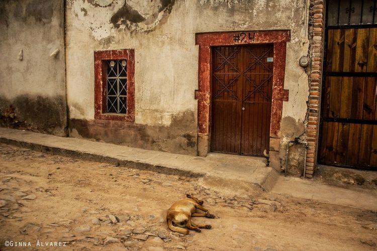 Dog Abandoned Places Nap Time Ginnaalvarez Ginna álvarez Front Door Street Guanajuato, México Ghost Town Rural