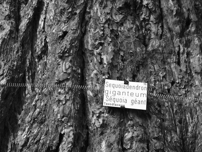 Close-up of text on tree trunk