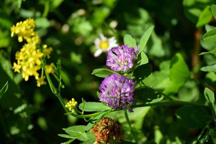 Flower Plant Leaf Nature Purple Beauty In Nature Nature Reserve No People Multi Colored Pink Color Outdoors Eco Tourism Summer Living Organism Close-up Plant Part Landscape Day Fragility Flower Head