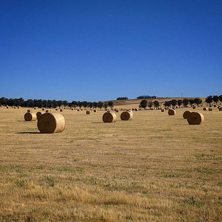 Bales of hay drying out in the summer heat in preparation for winter. Sydneysights Farm Melbourne