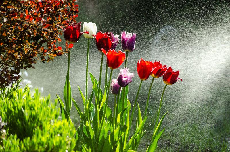Garden of