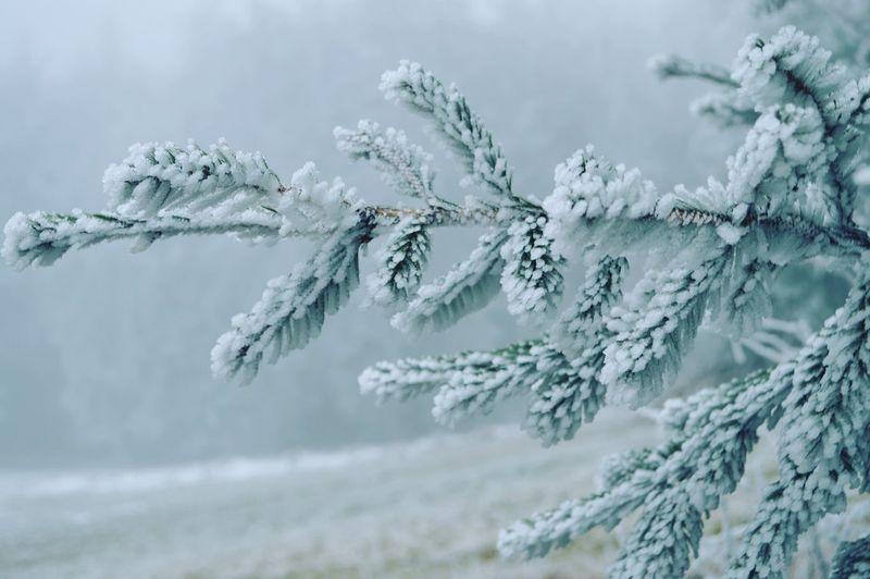 A frozen tree