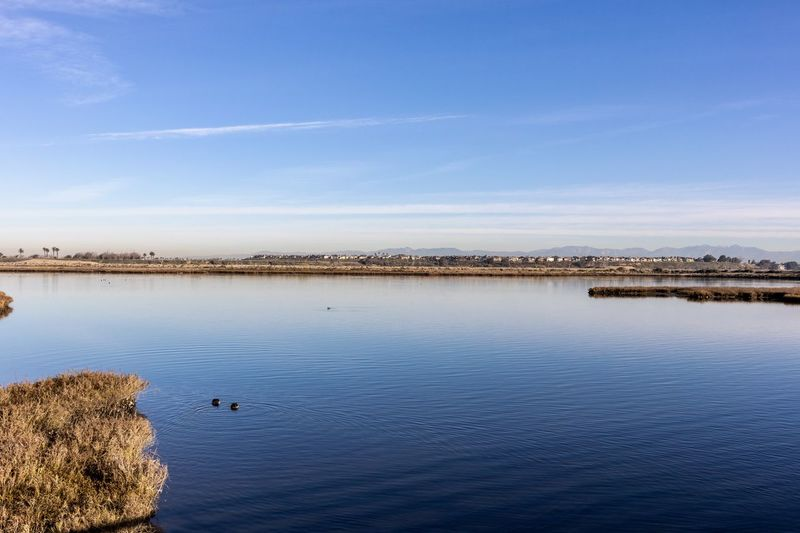 bolsa chica wetlands in Huntington Beach california Bolsa Chica Wetlands Water Scenics - Nature Sky Tranquility Tranquil Scene Beauty In Nature Waterfront Nature No People Lake Blue Day Architecture Non-urban Scene Idyllic Reflection Outdoors Cloud - Sky Built Structure Huntington Beach Orange County