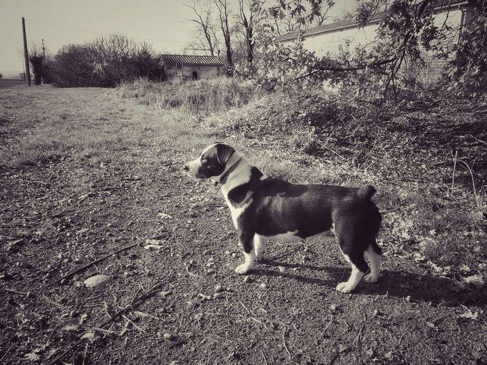 France , Dog , Animal , Whaiting My Photo