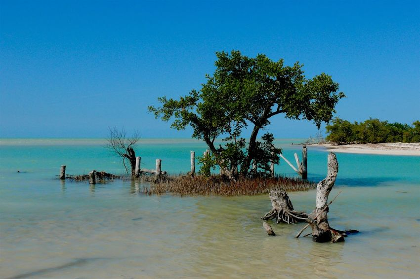 Delicious warm water of the Caribbean Sea at Isla Hotbox in the northern Yucatan Peninsula. Beach Beauty In Nature Blue Caribbean Sea Clear Sky Day Horizon Over Water Nature No People Outdoors Sea Topical Tranquil Scene Tranquility Tree