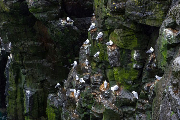 Full frame shot of rocks with seagulls perching in forest