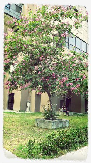 想拍這棵樹,卻無意間捕捉到一對情侶,自然地構成一幅溫馨的畫面(*˘︶˘*) (若有侵犯肖像權請告知,會立即刪除)高雄醫學大學