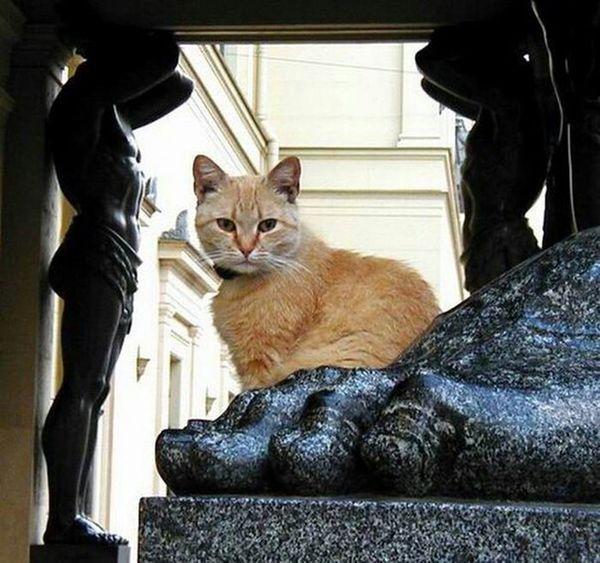 Favorite City Cat♡ Spb