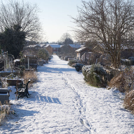 Snow on the allotments Allotment Bare Tree Beauty In Nature Branch Cold Temperature Day Landscape Nature No People Outdoors Scenics Sky Snow Snowdrift The Way Forward Tranquility Tree Weather Winter