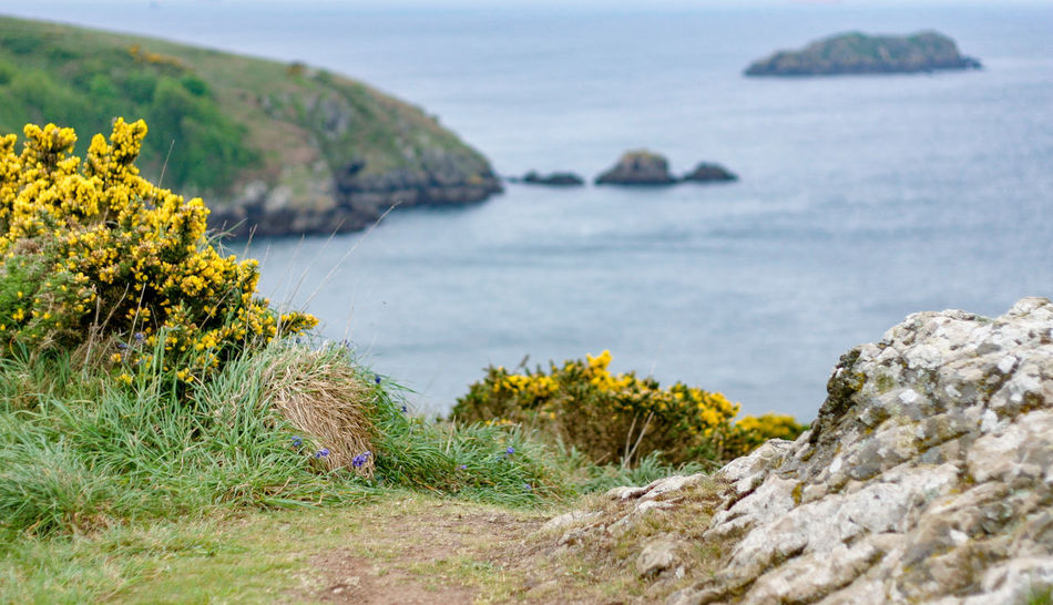 Pembrokeshire coastline, Wales Coastline Gorse Wales Yellow Flower Beauty In Nature Cliff Coast Common Gorse Day Flower Grass Landscape Nature No People Outdoors Pembrokeshire Rock - Object Scenics Sea Sky Tranquil Scene Tranquility Travel Destinations Yellow Yellow Gorse An Eye For Travel