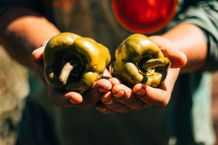 Midsection of person holding green bell peppers