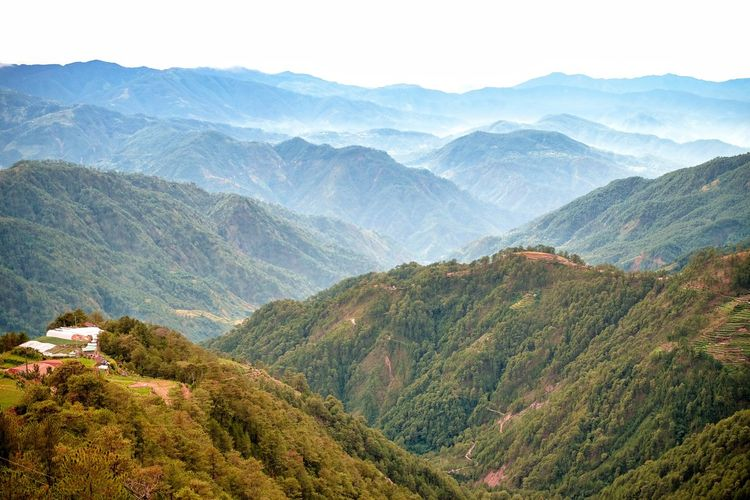 Fujifilm XT-20 Fujifilm Philippines Mountains And Valleys Mountainscape Beautifulview Mountains Mountain View Landscape_photography Landscape_Collection View View From Above Nature Tea Crop Tree Mountain Terraced Field Rural Scene Forest Agriculture Beauty Mountain Peak High Angle View Foggy Fog Weather Valley