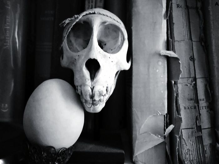 Egg and skull Books Books ♥ Conceptual Bnw_captures Bnw Blackwhite Black&white Black & White Black And White Blancoynegro Egg Death's Head Skull Blackandwhite Monochrome My Best Photo